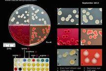 Microscopic Worlds