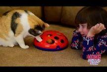 VetSofia - Gatos / My tips as a Vet. Follow me on: www.vetsofia.com