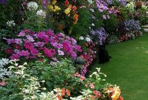 Gardening Ideas / by Melanie Richards