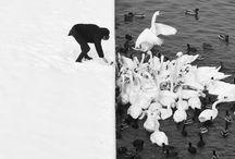 Photography / by Marina Lisinskiy