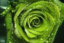 Green With Envy / by Norma Crain