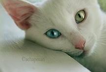 Pets / by Carol Van Curen-Wright