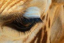 Wildlife / by Suzanne Varnes