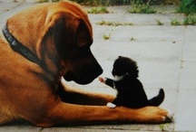 Cats and Dogs / by Mum Dawes
