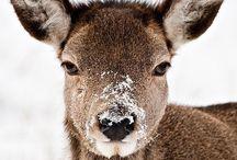 Dear Deer..