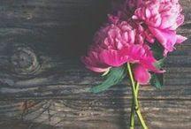 Virág Világ