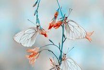 bug / きれいな虫の写真をつっこむ