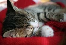 Future kitten mum / by Natalie Douka