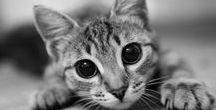 Cute Pest