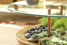 Arty plants / Brilliant way to display plants.
