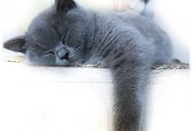 halka.life - a British cat  / Life of Halka, a little British cat from Poland. Beautiful kitty, meows photos