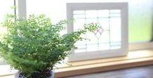 窓 / 自然素材、無垢材、薪ストーブを取り扱う富山県砺波市の工務店・株式会社ミズカミの施工事例集です。