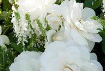 My White Garden ✿