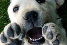 Sweet pups / by Julie Oda