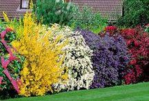 Garden Ideas / by Carli French-Mulloy
