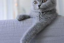 •Cat / Animals♡