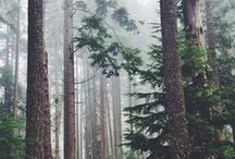 •Forest