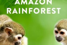 Amazon travel / Discover the best travel tips for Amazon, how to travel in Amazon, what to see, Amazon bucket list and how to save money for your next Amazon travel. Best things to do in Amazon, the ideal itinerary and Amazon ultimate bucket list.