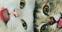 Gatos e gatices