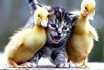 fuzzy fuzzy cute cute / by Anna Zeimet