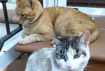 Gatos - Cats / Mis gatos y los gatos que me gustan. My cats and the cats I love.