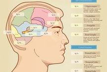 Infographics / An artsy-fartsy Pinterest board of crystal clear inforgraphics! <(o.O<)