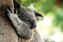 Australia / Pictures of Australia #Australia #travel / by Brian Mc