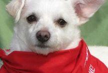 Fabulous Dog Ears (ADOPTABLE!)