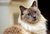 """Adopt a Cat Month! / June is Adopt a Cat Month! (The other 11 are """"worship a cat months."""")"""