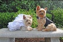 Wedding Planning with Dogs / Because you can't leave out your best friend on your special day! Or maybe you need ideas for a doggie wedding..