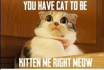 You've CAT to be KITTEN me right MEOW!