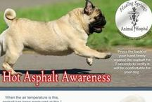 Summer Safety / Summer safety information and tips to help keep your pet safe!