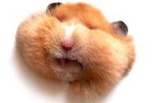 Animal Planet / An artsy-fartsy Pinterest board of animal life far and wide. <(o.O<)