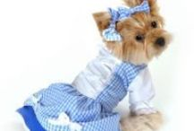 Wizard of Oz Themed Dog Costumes / Dress up your dogs in a wizard of oz theme. Whether you are going as Dorothy or looking to dress up your dog has the cowardly lion, these fun costumes are ideal!