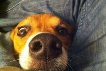 Humor / Funny videos people have posted of dogs that will make you laugh again and again!