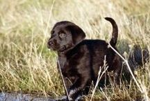 Tricks and Dog Training
