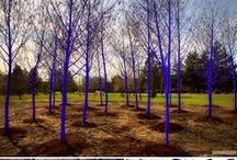 """Kostantin Dimopoulos, """"The Blue Trees"""" / Kostantin Dimopoulos, """"The Blue Trees"""""""