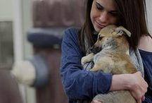 #StartAStoryAdopt / Pet adoption: A story where everyone lives happily ever after!