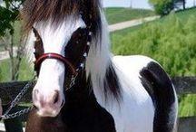 les plus beau chevaux du monde