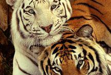 Amazing animal kingdom