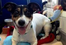 Life at BDCH / Here at BDCH, we love our animals. We regularly have dogs waiting for new homes hanging out in the office with us. Here's just a snapshot of what happens behind the scenes.