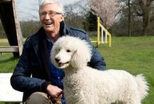Paul O'Grady: For the Love of Dogs / Our ITV1 series made stars out of many of our dogs. The happy tales of how we rescued and rehomed these characters won the heart of the nation. Find out all about them here.