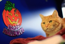 Halloween cats / They're no scaredy cats.
