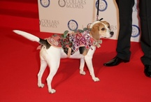 Canine couture auctioned off to help our animals / Some of the biggest names in fashion including Stella McCartney, Mulberry and Vivienne Westwood have created canine couture which is being auctioned off to raise much-needed funds to care for the thousands of animals that come into our care every year. http://auction.collarsandcoats.org.uk/auction/index.php