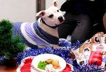 Letters to Santa / Here at Battersea, we do all we can to make sure our residents have a Happy Christmas too. They enjoy as many traditions as possible such as presents and a special dinner - but we couldn't do this without your support. Would you like to bring some festive cheer to our dogs and cats this season? Here's what they have asked Santa for ...