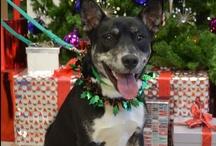 Paul O'Grady's 12 dogs of Christmas