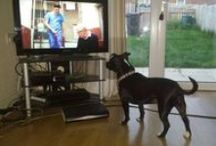 Pets Love Pogdogs competition winners / We absolutely loved seeing all the pictures of your pets enjoying 'Paul O'Grady: For the Love of Dogs' over the last few weeks. We've randomly selected 25 winners who will each receive a goodie bag of Battersea items as well as a few added extras from our specially selected partners.   Here's the winning details! http://www.battersea.org.uk/about_us/whats_new/pogdogs_competition.html  These are some of our favourite photos.