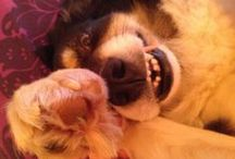 Pet selfies / #PetSelfies to raise money for our pooches and pusscats. Text DOGS to 70800 to donate £5 to help rebuild London kennels www.battersea.org.uk/KennelAppeal