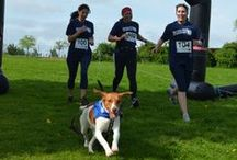 Muddy Dog Challenge 2015 / Muddy Dog Challenge 2015 is the UK's first obstacle course and mud run where animal lovers can take part with their dogs.   Take on the challenge with or without your four-legged legged friend and fundraise for Battersea.