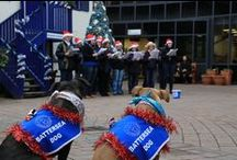 Festive Fun at Battersea Dogs & Cats Home / From #SantaPaws to Carol Concerts, there are lots of festive events taking place at Battersea Dogs & Cats Home